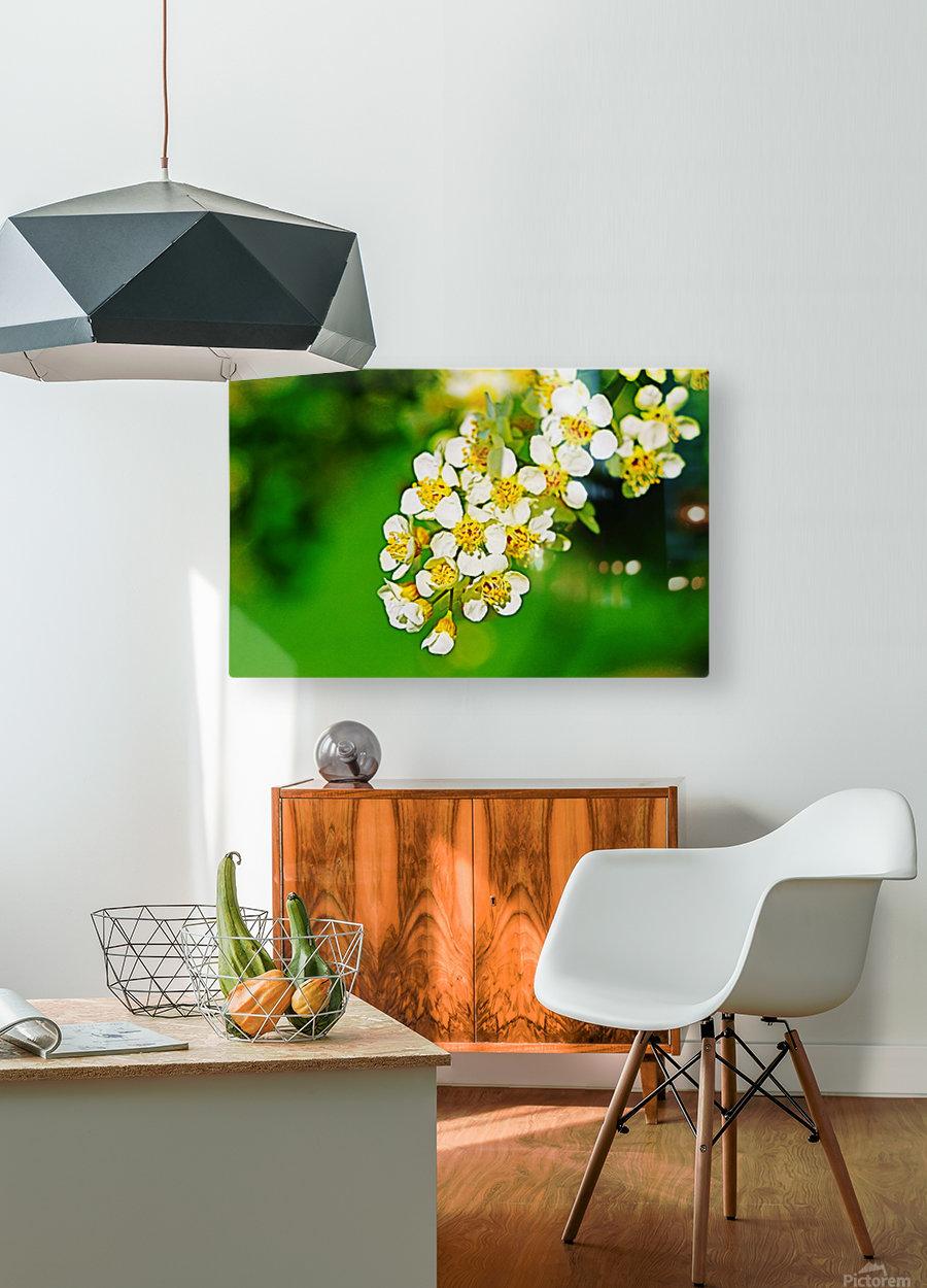 Springtime  HD Metal print with Floating Frame on Back