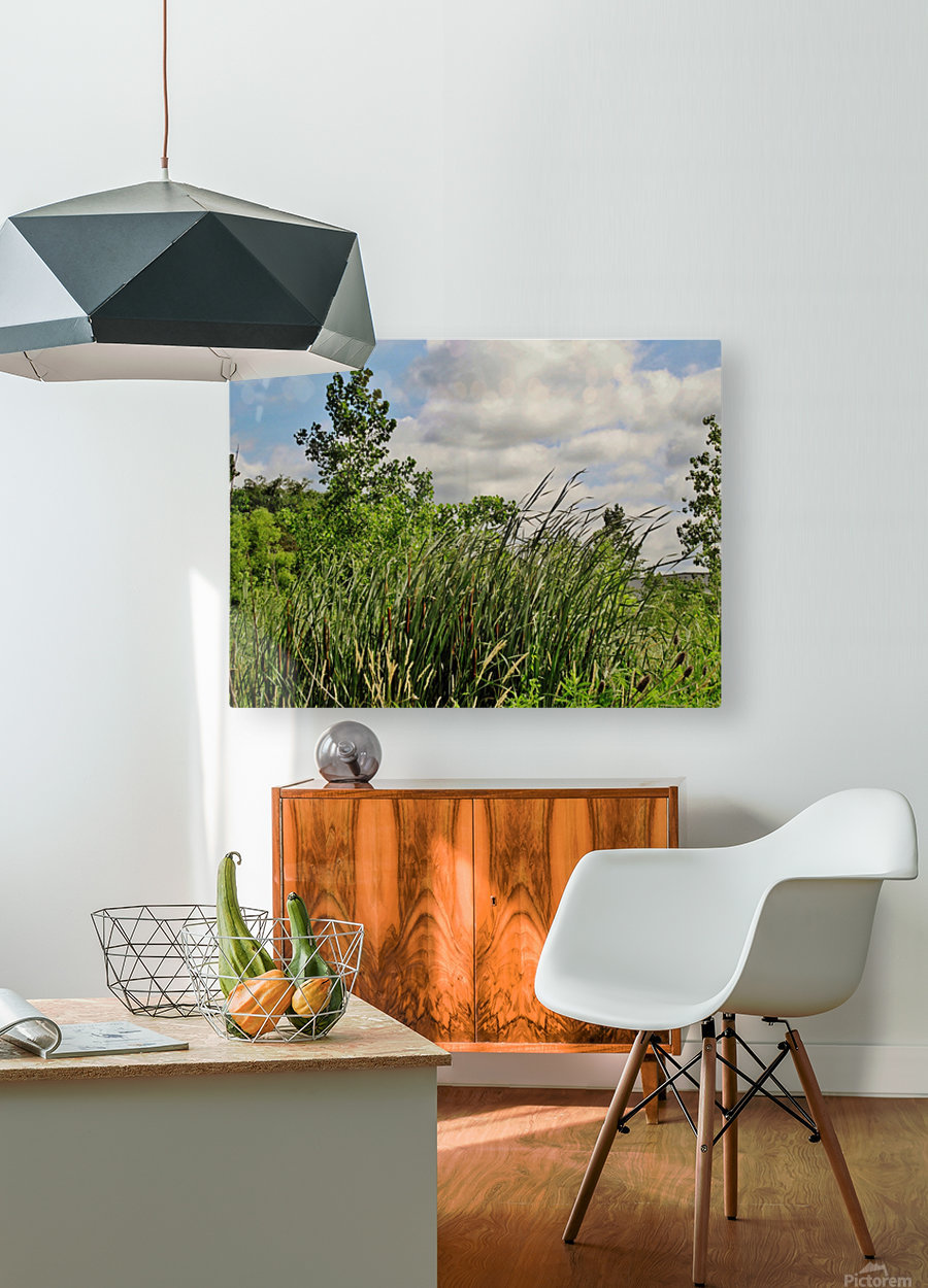 Cattails In The Wind  HD Metal print with Floating Frame on Back