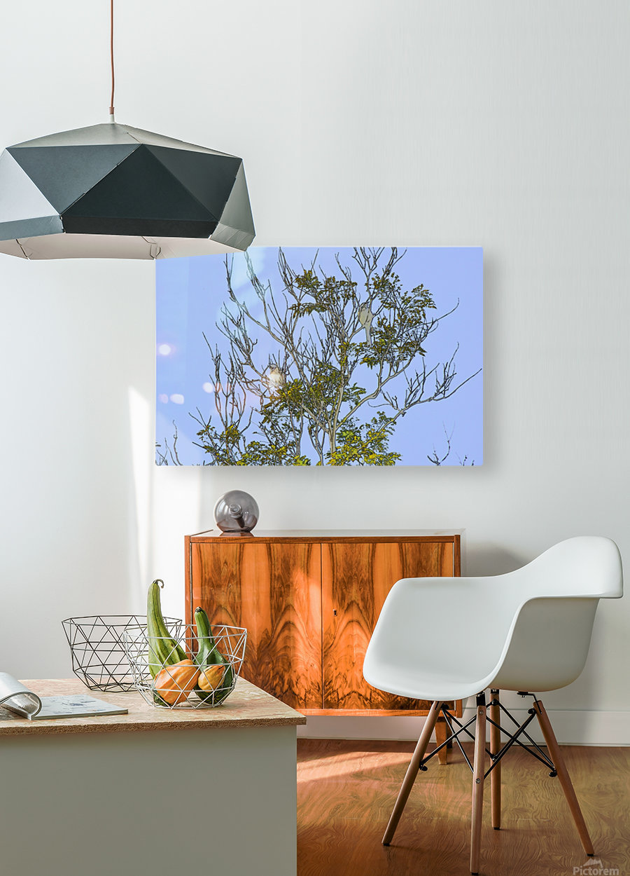 Two Blue Jays in Tree 2 abstract  HD Metal print with Floating Frame on Back