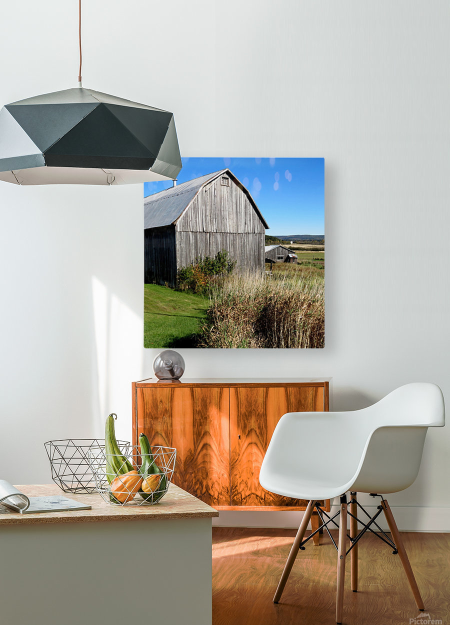 Cattle barn, Penobsquis, NB, Oct. 6, 2013  HD Metal print with Floating Frame on Back
