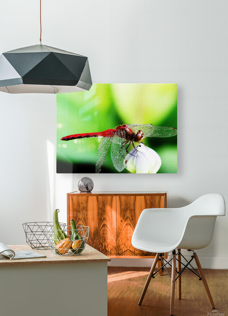Red Dragonfly 3  HD Metal print with Floating Frame on Back