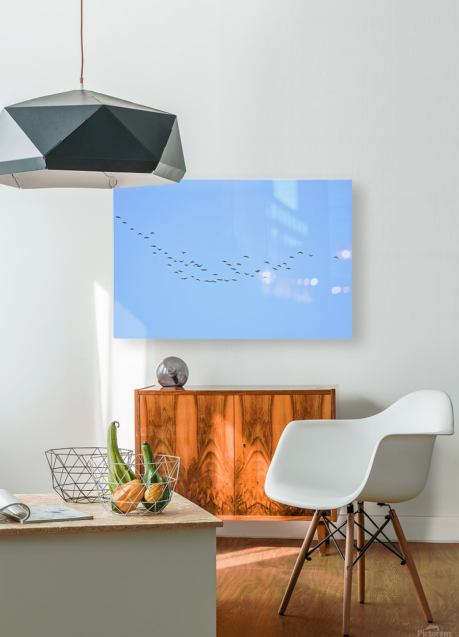 Flock of Geese 3   HD Metal print with Floating Frame on Back