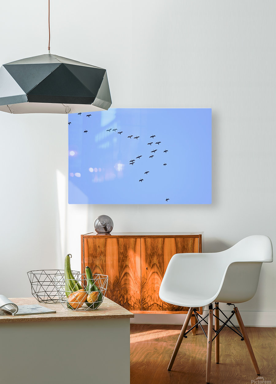 Flock of Geese 2  HD Metal print with Floating Frame on Back