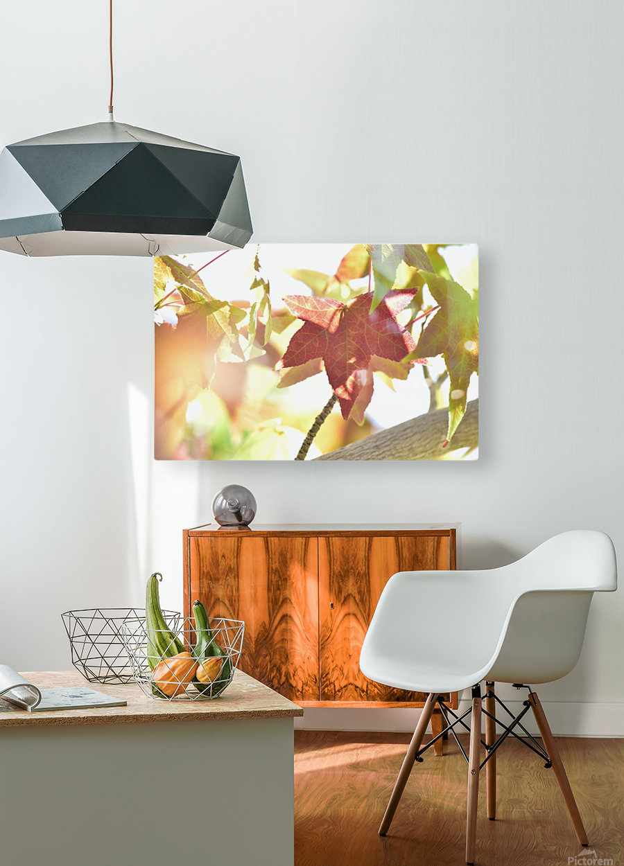 Leaves Macro 1   HD Metal print with Floating Frame on Back