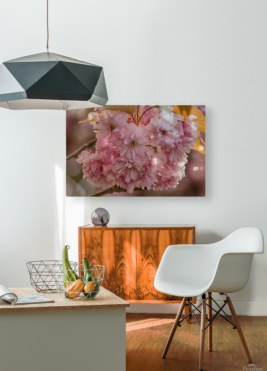 Apple Blossoms  HD Metal print with Floating Frame on Back