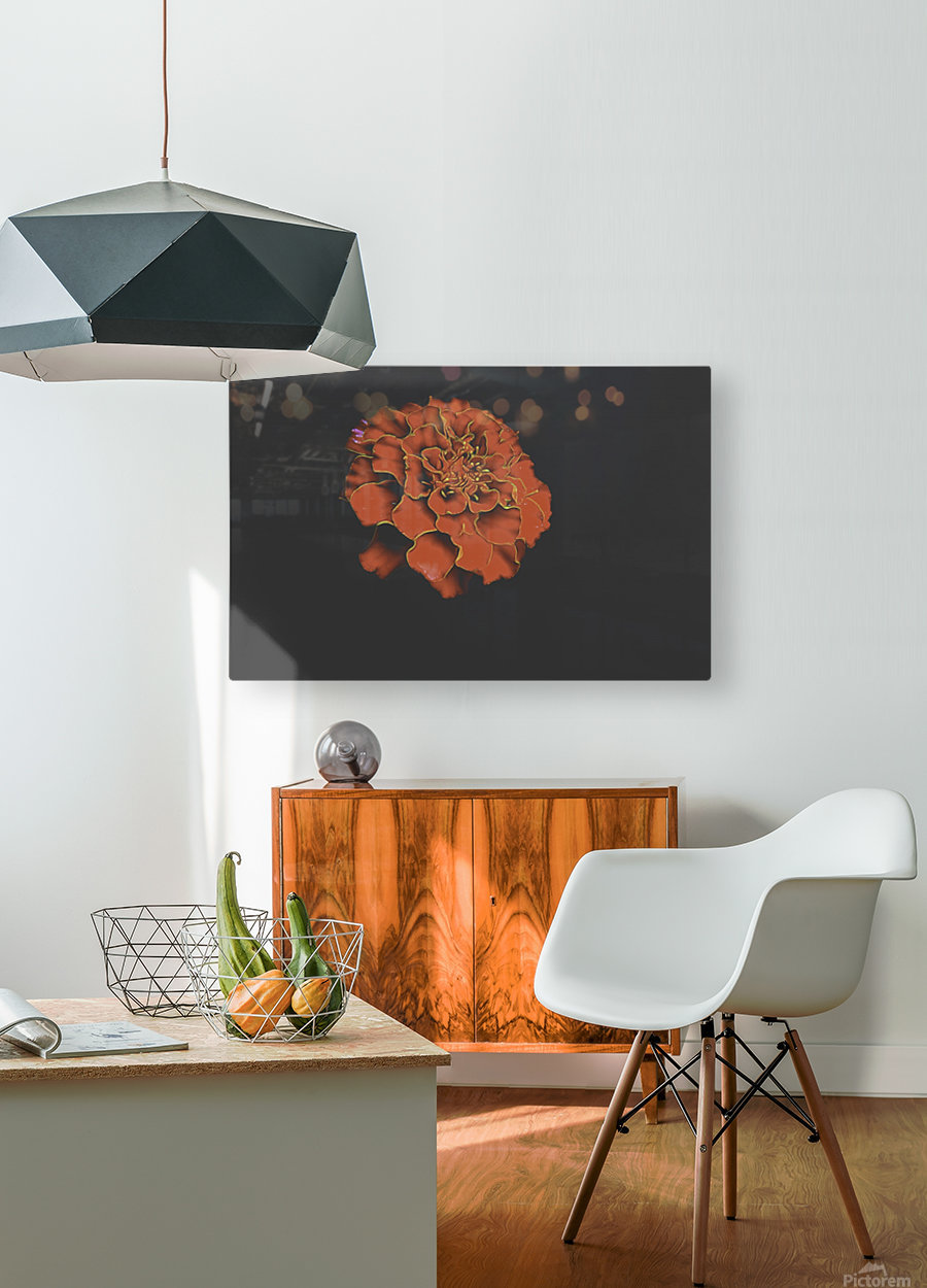 Carnation Bliss  HD Metal print with Floating Frame on Back