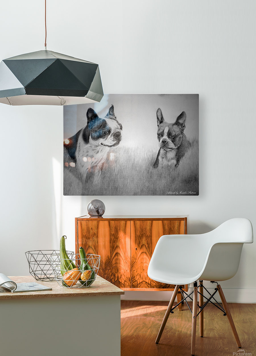Boston Terriers  HD Metal print with Floating Frame on Back