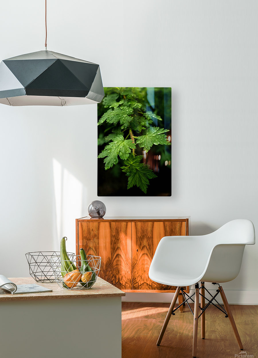 Poised Drops   HD Metal print with Floating Frame on Back