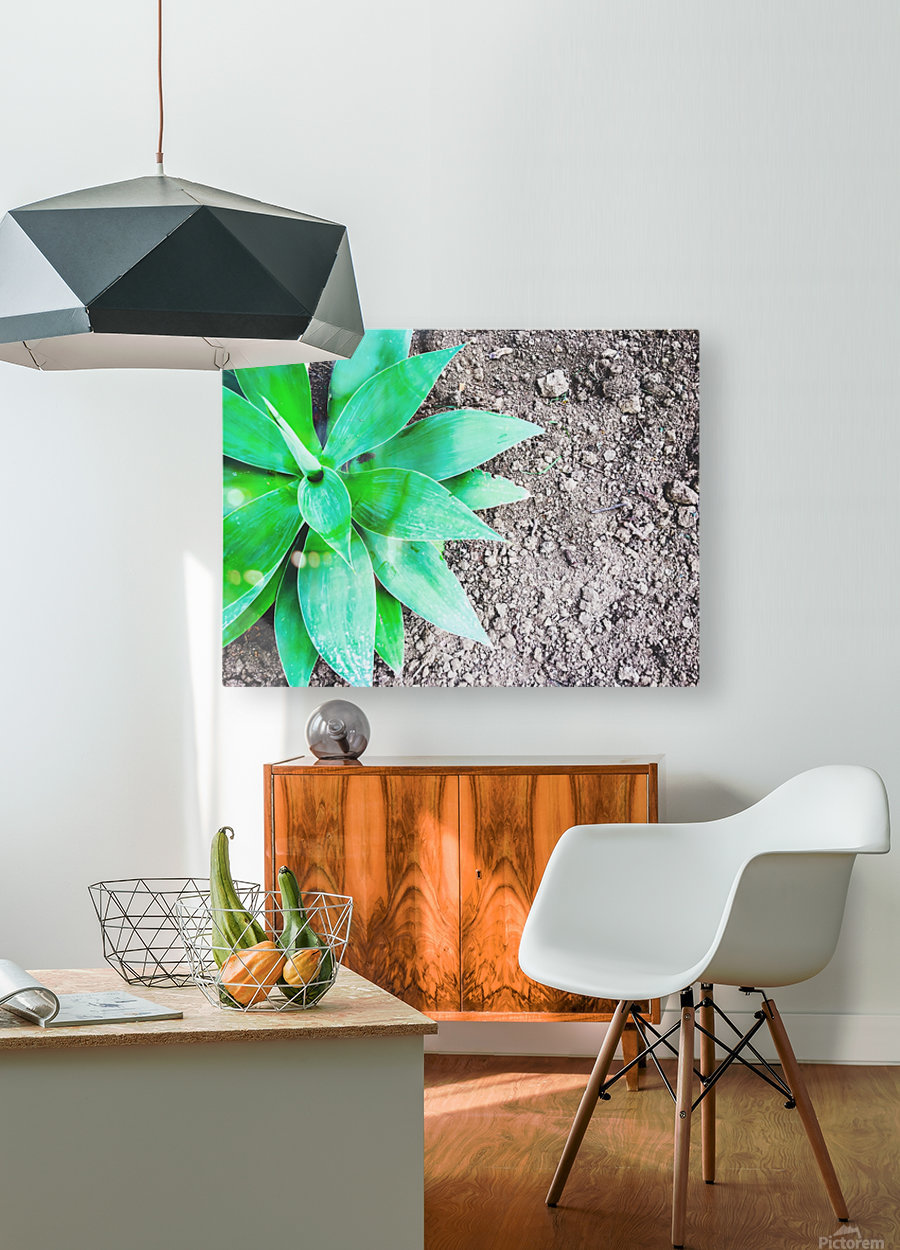 green leaf plant with sand background  HD Metal print with Floating Frame on Back
