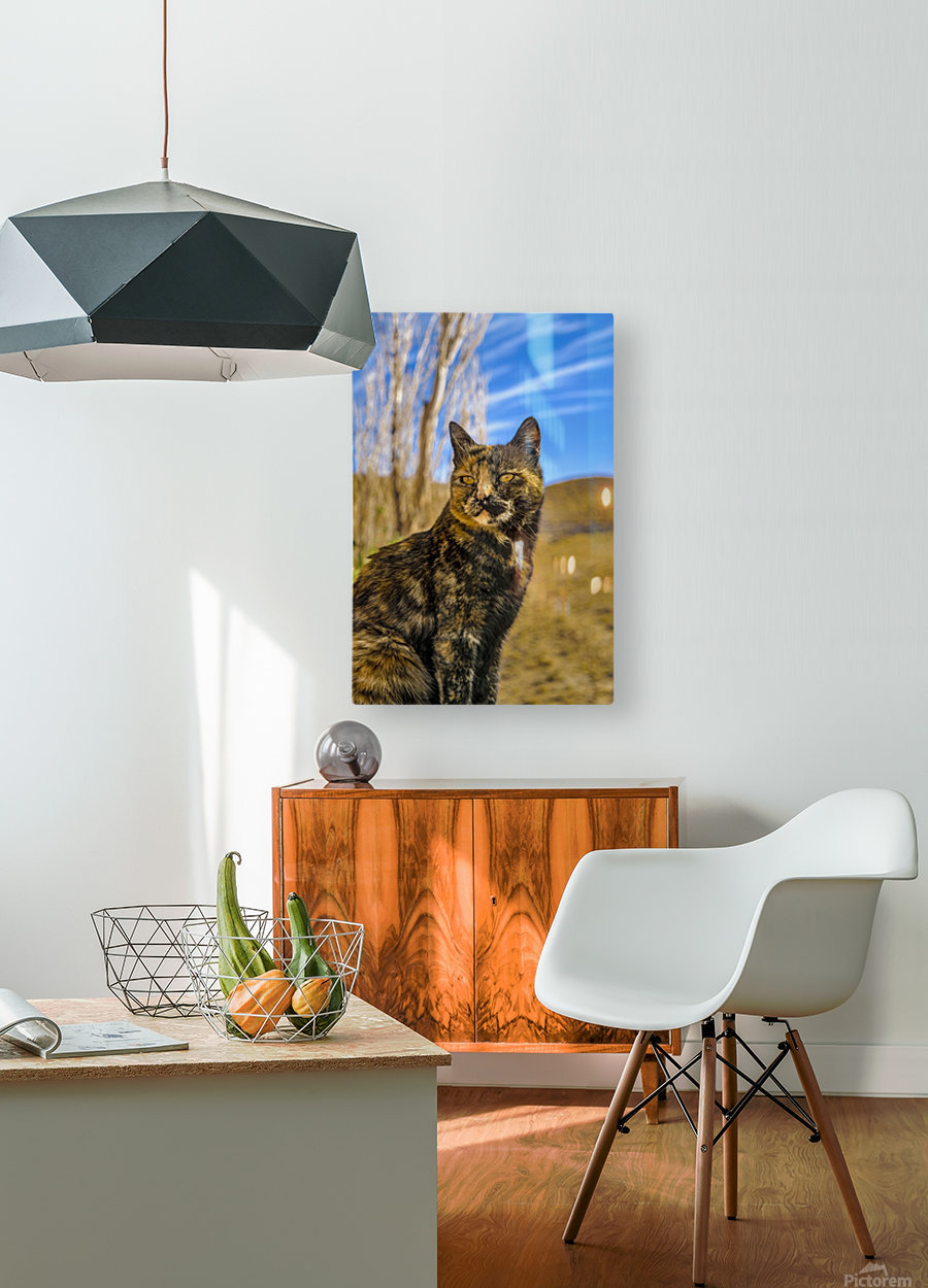 Adult Wild Cat Sitting and Watching  HD Metal print with Floating Frame on Back