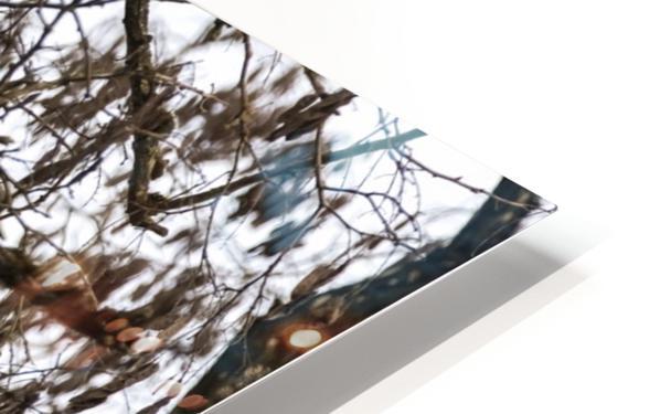 Bald Eagle (Haliaeetus leucocephalus) perched in a tree, Cowichan Bay; British Columbia, Canada HD Sublimation Metal print