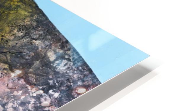 Illustration of a white rhinoceros against a blue background Impression de sublimation métal HD
