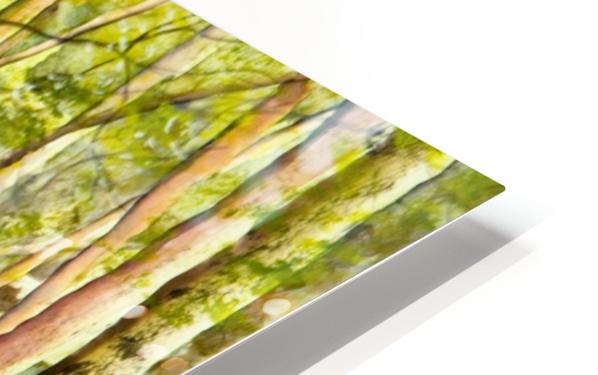 Shady Lane  HD Sublimation Metal print