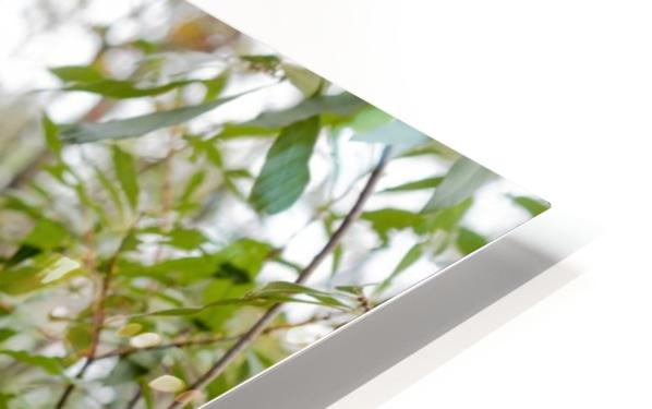 The Animated Forest HD Sublimation Metal print