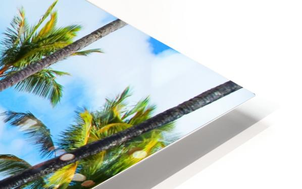 palm trees with green tree and blue cloudy sky in summer HD Sublimation Metal print
