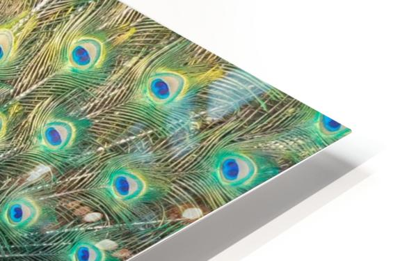 Peacock Feathers Full Frame HD Sublimation Metal print