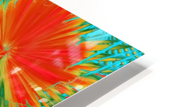 closeup palm leaf texture abstract background in orange blue green HD Sublimation Metal print
