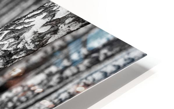 The Birches HD Sublimation Metal print