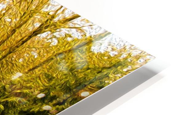 Walk HD Sublimation Metal print
