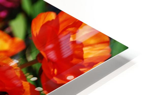 Garden with Orange Flowers Growing HD Sublimation Metal print