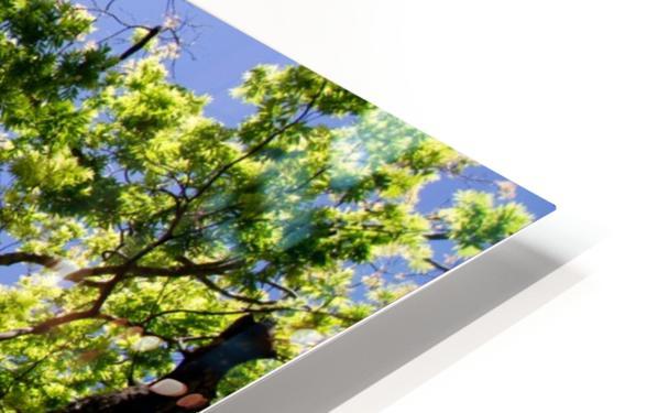 Puissance HD Sublimation Metal print