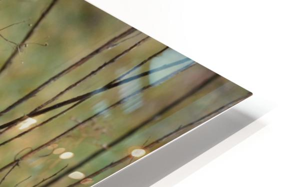 Through the Sticks HD Sublimation Metal print