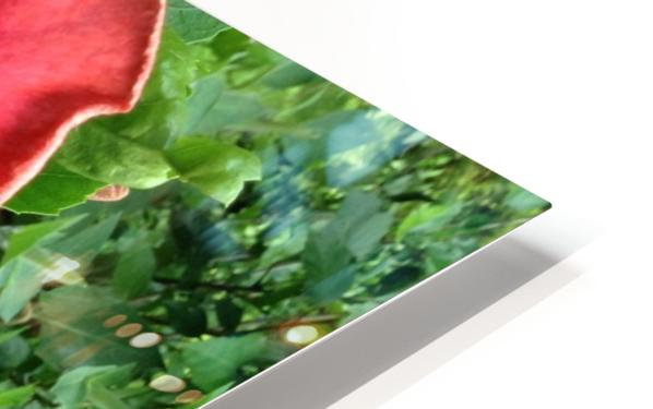 Awesome Petals HD Sublimation Metal print
