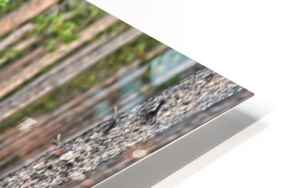 2536-Paddles HD Sublimation Metal print