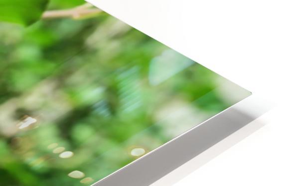 Bright Lilac  HD Sublimation Metal print