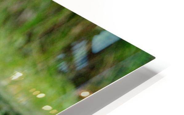 Great Blue Heron HD Sublimation Metal print
