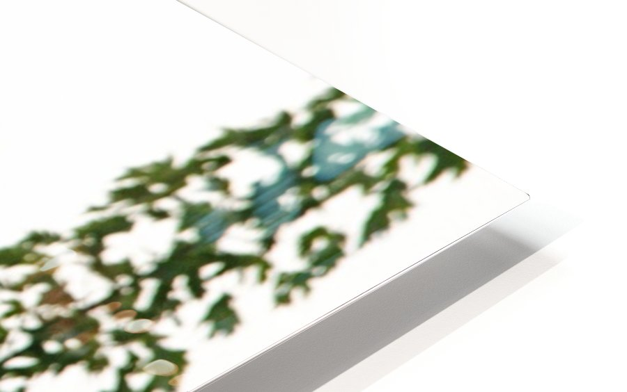 Fierce Bald Eagle HD Sublimation Metal print
