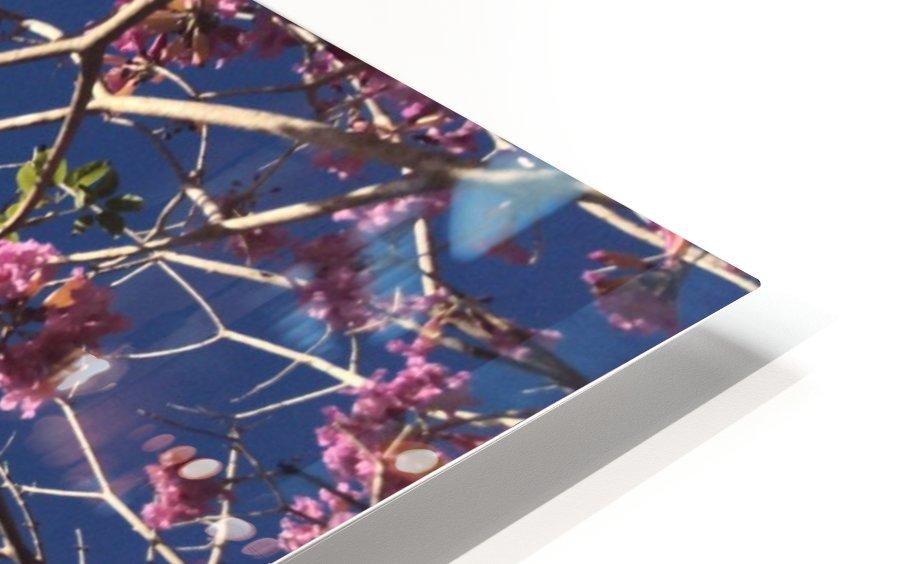 Anime cherry blossom xx HD Sublimation Metal print