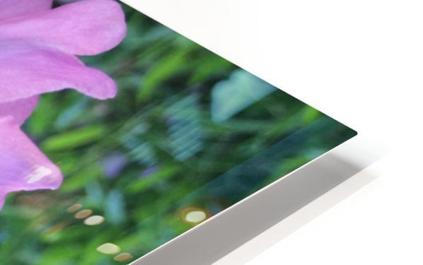 LOTUS DREAMING HD Sublimation Metal print