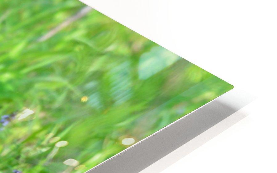 2827-Turn around HD Sublimation Metal print