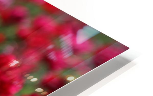 Never-ending Roses  HD Sublimation Metal print