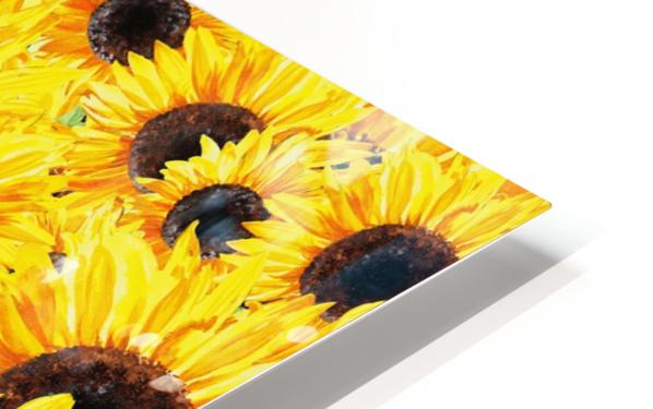 Sunflowers Field Watercolor Painting by Irina Sztukowski HD Sublimation Metal print
