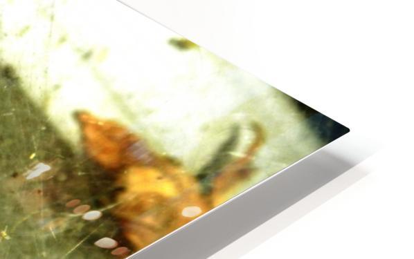 D (1) HD Sublimation Metal print