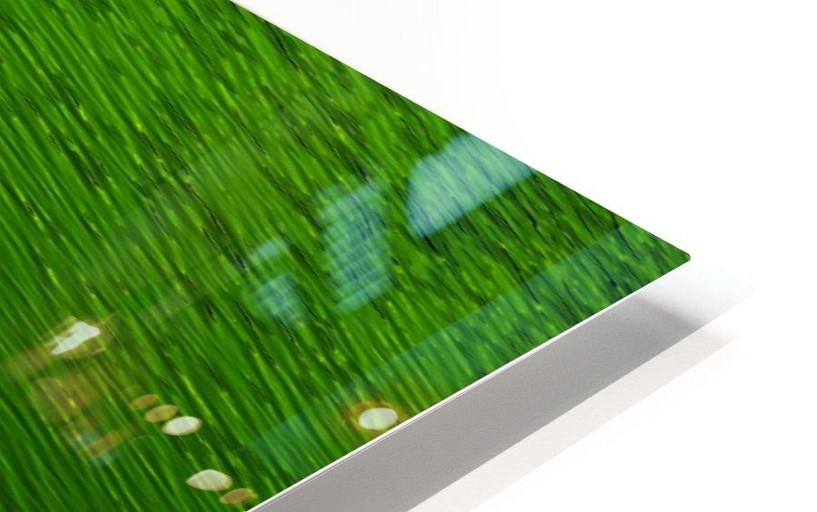 F (14) HD Sublimation Metal print