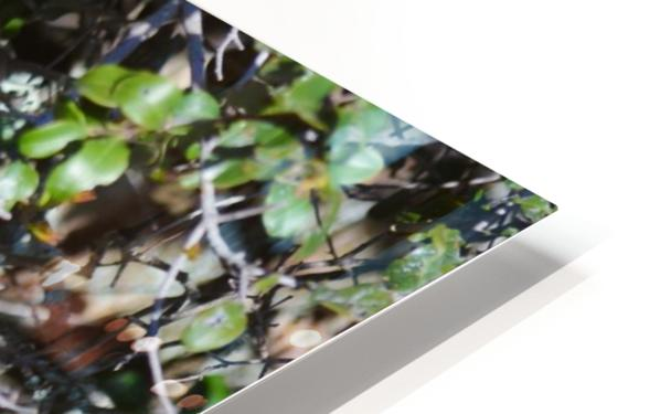 Blue Reflective Bird HD Sublimation Metal print