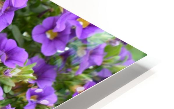 Beautiful Purple Flowers Photograph HD Sublimation Metal print