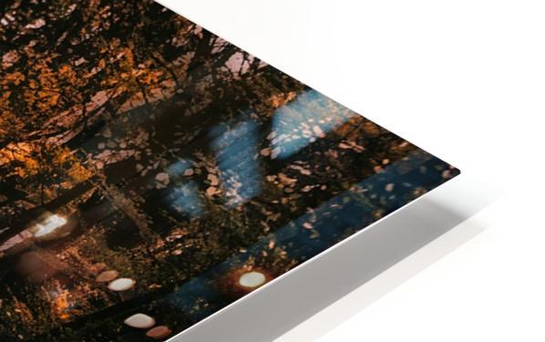 Forest 2_OSG HD Sublimation Metal print