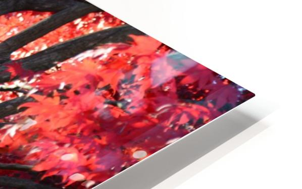 Beautiful Red Fall Foliage HD Sublimation Metal print