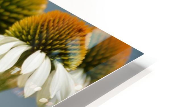 White Flowers Photograph HD Sublimation Metal print