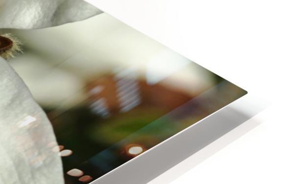 White Magnolia HD Sublimation Metal print