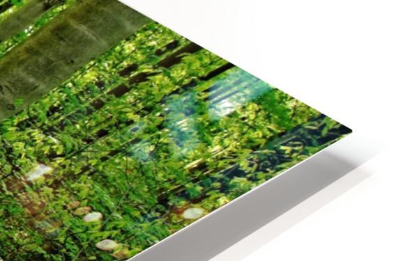Trillium Woods VI HD Sublimation Metal print
