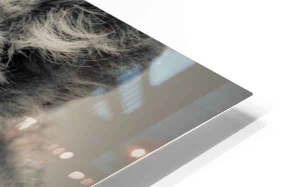 Little Prince - 2  HD Sublimation Metal print