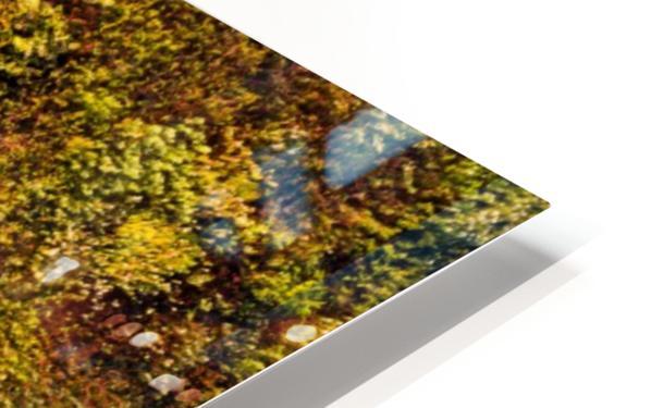 Voies Naturelles Impression de sublimation métal HD