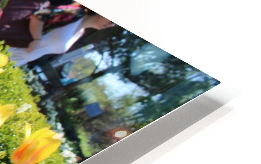 IMG_4036 HD Sublimation Metal print