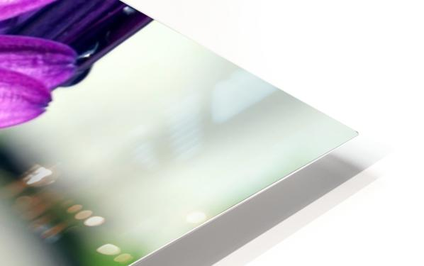 Waterdrop On Purple Flower HD Sublimation Metal print