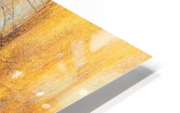 Autumn Birches HD Sublimation Metal print